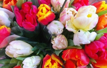 Tulips – very Swedish